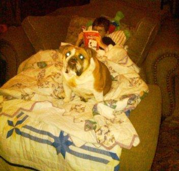 A real bulldog reader!