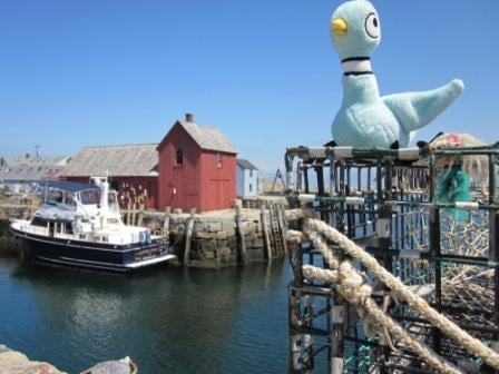 Pigeon at the motif, an historic lobershack in rockport, ma