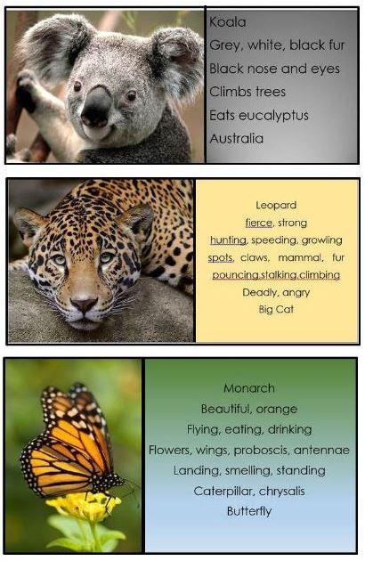 combo animal1